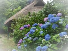 季節の花のある暮らし
