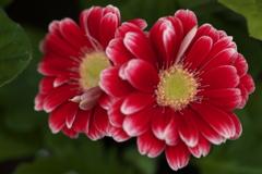 希望の花♪2