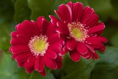 希望の花♪4