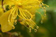 雨の万葉庭園♪5