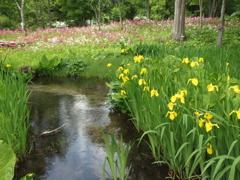 初夏の水生植物園♪4
