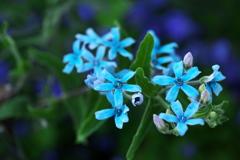 公園の花たち♪8