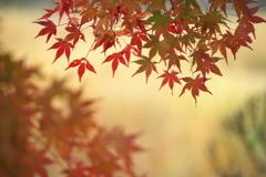 晩秋の万葉庭園♪3