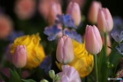 微笑みの花たち♪8