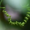 温室の花♪8