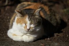 お山の猫ちゃん♪1