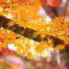 紅葉・日光の秋♪3