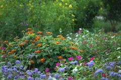 公園の花たち♪6