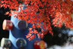 鑁阿寺の秋♪5