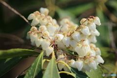 白い春♪1