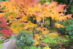 田母沢御用邸記念公園の秋♪6