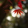 紅葉・逍遥園♪4