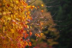 秋かがやく♪7