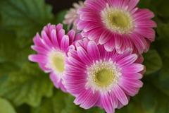 希望の花♪1