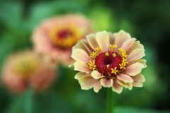 公園の花たち♪9