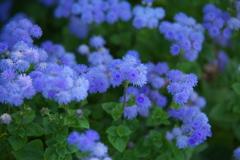 公園の花たち♪4