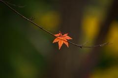 秋かがやく♪8