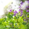 春の野に‥♪5