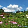 花農場の夏♪5