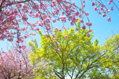 春爛漫・都賀の里♪3