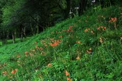 星野の森・夏5