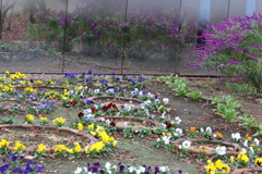 富弘美術館・庭の花♪2