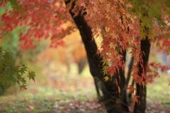 秋かがやく♪6