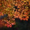 紅葉・日光の秋♪2