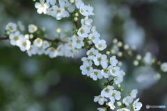 白い春♪2