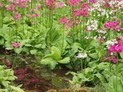 初夏の水生植物園♪10