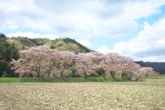 儚い春♪1