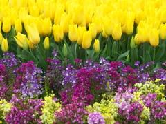 春がいっぱい♪3