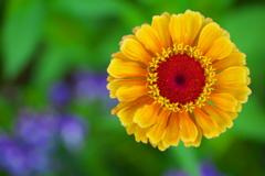公園の花たち♪5
