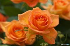 微笑みの花たち♪21