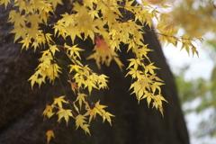 秋かがやく♪9