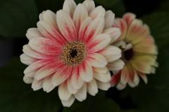 希望の花♪3