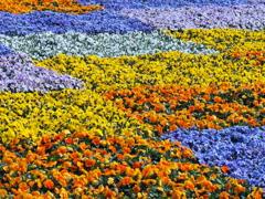 春ですね~♪2