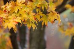 晩秋の万葉庭園♪1