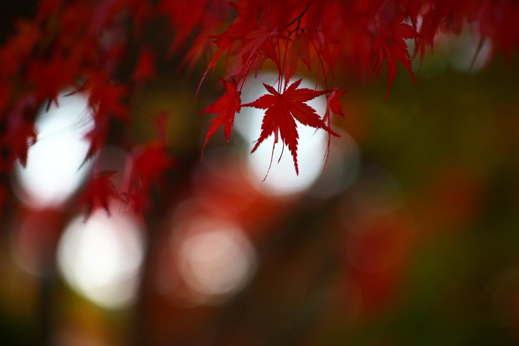 浄光寺の秋♪10