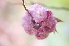 春爛漫・都賀の里♪2