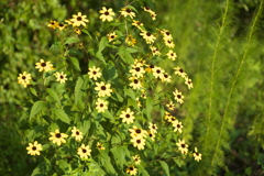 公園の花たち♪7