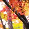 浄光寺の秋♪7