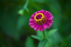 公園の花たち♪10