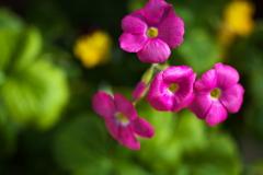 花を求めて♪1
