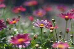 初春の夢♪5
