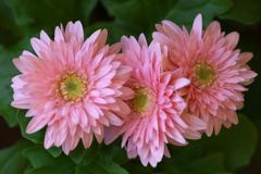 希望の花♪5