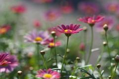 初春の夢♪4