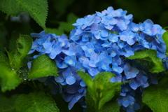雨の万葉庭園♪1