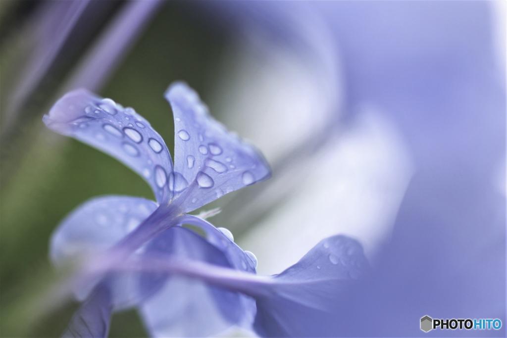 雨上がりの妖精