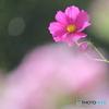 花、一輪、、